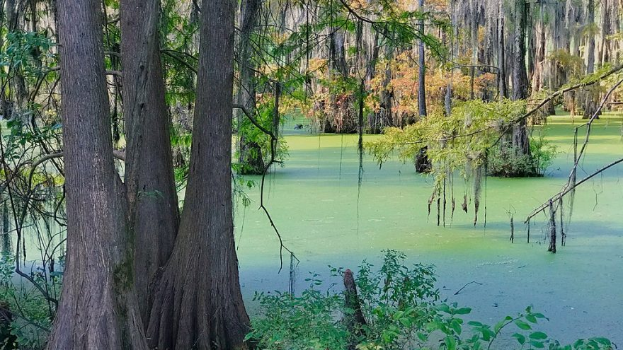 The Lincoln Project is the Epitome of The Swamp